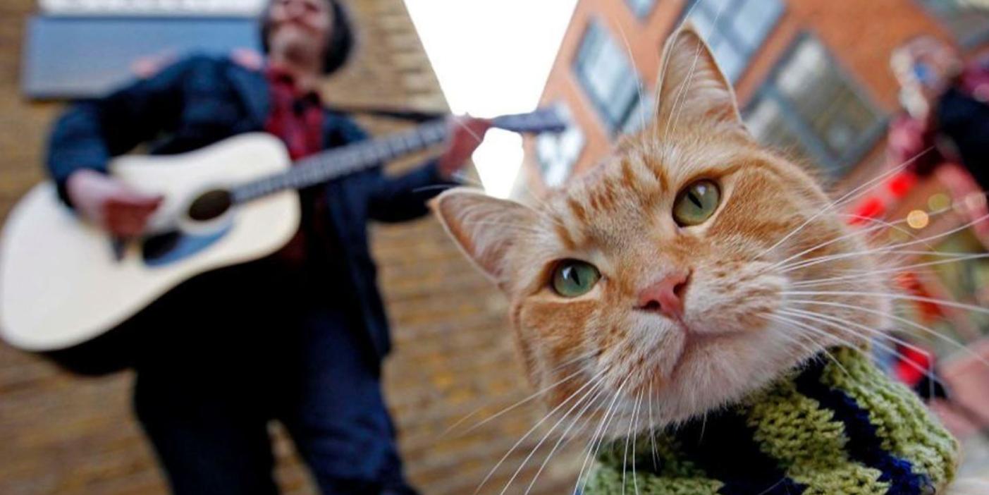 В Британии умер уличный кот по кличке Боб